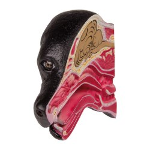 Hunde Anatomie