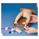 Intraosseous Infusion trainer, Infant