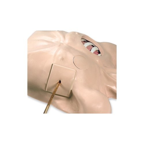 Chest Tube Manikin (R10130)