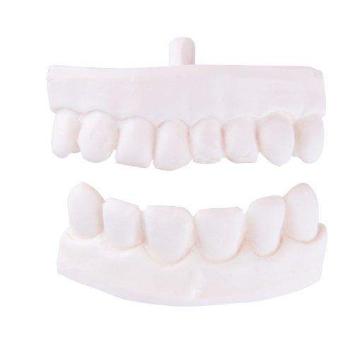 Ersatz Zahn-Teilprothese für P10 und P11