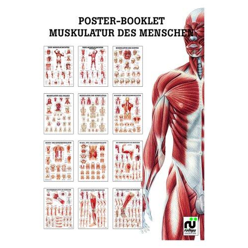 Miniposter Booklet - Muskulatur (MPB02)